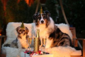 Symbolbild: Tiere an Silvester