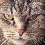 Symbolbild: Netz-Bekanntheit Grumpy Cat ist tot