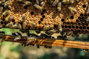 Symbolbild: Bienen in Kenia gegen zertrampelte Felder