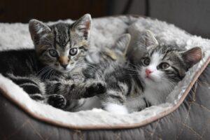 Symbolbild: Once: Katzenbilder statt Dick-Picks