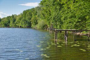Symbolbild: Der Rhein wird sauberer