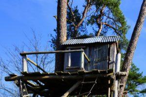 Dannenröder Forst: Aktivistin stürzt von Baum