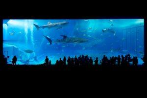 Symbolbid: Pfungstadt verabschiedet sich von Hai-Aquarium Shark City